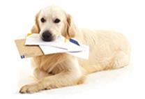 mailing-dog
